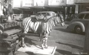 Tijuana Faux Zebra