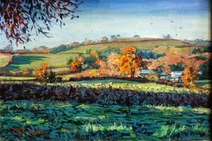 Autumn Light by Tilly Willis
