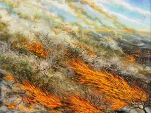 Blaze, 2016 by Tilly Willis