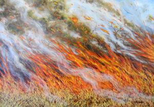 Bushfire Inferno, 2014 by Tilly Willis