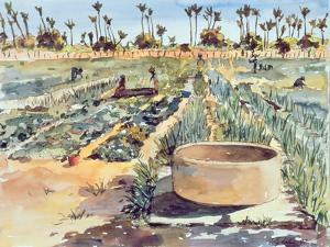 The Women's Garden, Senegal, West Africa, 1997 by Tilly Willis