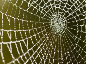 Spider Web Glistening with Dew Droplets by Tim Barker