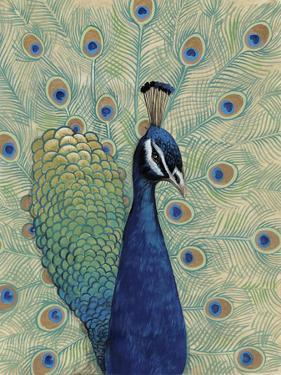 Blue Peacock I by Tim