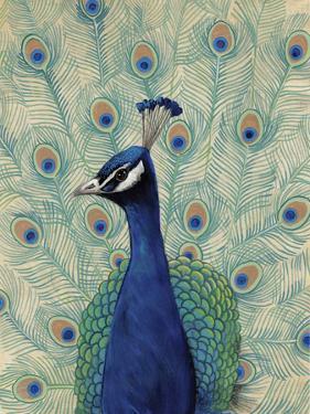 Blue Peacock II by Tim