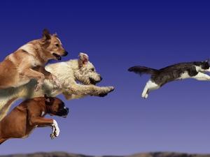 Dogs Chasing Cat by Tim Davis