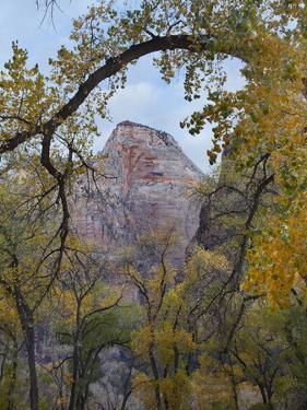 Abraham Peak Seen Through Trees, Zion National Park, Utah by Tim Fitzharris