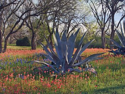 Agave and paintbrushes, Atascosa County, Texas by Tim Fitzharris