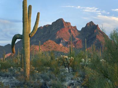 Ajo Mountains, Organ Pipe National Monument, Arizona by Tim Fitzharris