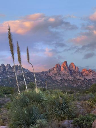 Alpenglow on the Organ Mountains, Aguirre Springs, New Mexico. by Tim Fitzharris