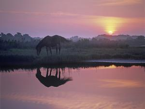 Assateague Island National Seashore with Wild Mare at Sunrise, Maryland by Tim Fitzharris
