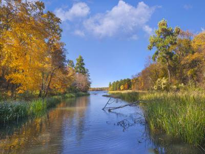 Autumn color along Tyler Lake, Tyler Lake State Park, Texas by Tim Fitzharris