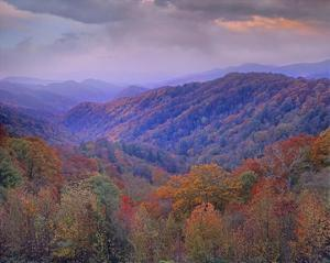 Autumn deciduous forest, Great Smoky Mountains National Park, Tennessee by Tim Fitzharris