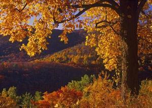 Autumn deciduous forest, Shenandoah National Park, Virginia by Tim Fitzharris