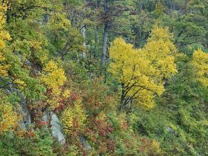 Autumn Foliage at Marys Rock, Shenandoah National Park, Virginia by Tim Fitzharris