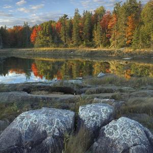 Autumn Shoreline at Thomas Bay, Desert Island, Maine by Tim Fitzharris