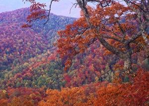 Blue Ridge Range with autumn deciduous forest, near Buck Creek Gap, North Carolina by Tim Fitzharris