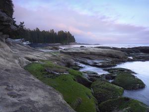 Botanical Beach, Juan De Fuca Provincial Park, Vancouver Island, British Columbia, Canada by Tim Fitzharris