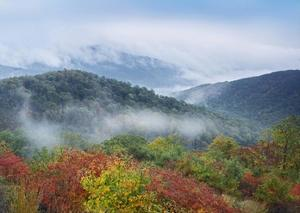 Broadleaf forest in fall colors, Skyline Drive, Shenandoah National Park, Virginia by Tim Fitzharris