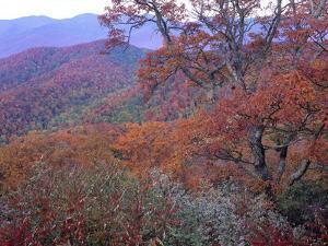 Buck Creek Gap, Blue Ridge Range, Blue Ridge Parkway, North Carolina, Usa by Tim Fitzharris