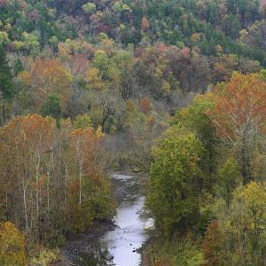 Cassatot River Flows Through an Autumn Forest, Arkansas, Usa by Tim Fitzharris