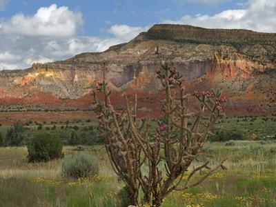 Chola cactus at Kitchen Mesa, Ghost Ranch, New Mexico, USA by Tim Fitzharris