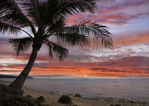 Coconut Palm at sunset near Dimiao, Bohol Island, Philippines by Tim Fitzharris