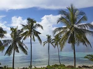 Coconut Palm trees, Bikini Beach, Panglao Island, Philippines by Tim Fitzharris