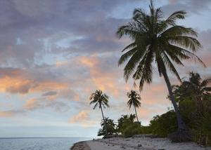 Coconut Palm trees, Pamilacan Island, Bohol Island, Philippines by Tim Fitzharris