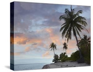 Coconut Palm trees, Pamilacan Island, Bohol Island, Philippines by Tim Fitzharris