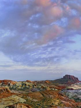 Colorful Landscape of Rainbow Vista, Valley of Fire State Park, Nevada, Usa by Tim Fitzharris
