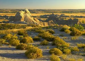 Coyote Bush and eroded features bordering grasslands, Badlands National Park, South Dakota by Tim Fitzharris