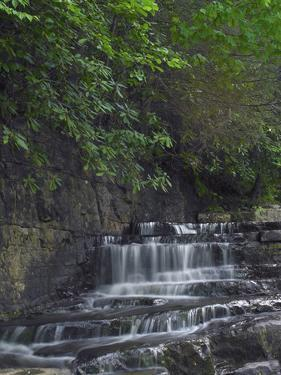 Dismal Falls, Jefferson National Forest, Virginia by Tim Fitzharris