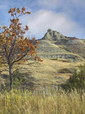 Fall Foliage in South Unit, Theodore Roosevelt National Park, North Dakota by Tim Fitzharris