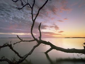 Flamingo Bay, Everglades National Park, Florida, Usa by Tim Fitzharris