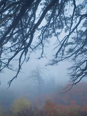 Fog Obscured View from Pinnacles Overlook Shenandoah National Park, Virginia by Tim Fitzharris
