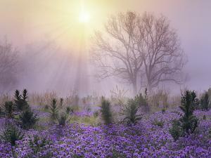 Foggy sunrise, South Llano River State Park, Texas by Tim Fitzharris