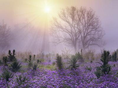 Foggy sunrise, South Llano River State Park, Texas by Tim Fitzharris