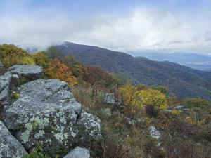 Forested Landscape Seen from Hazel Mountain Overlook, Shenandoah National Park, Virginia by Tim Fitzharris