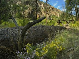 Frijoles Canyon in Spring, Bandelier National Monument, New Mexico, Usa by Tim Fitzharris