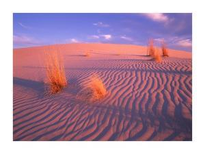Gypsum dunes, Guadalupe Mountains National Park, Texas by Tim Fitzharris