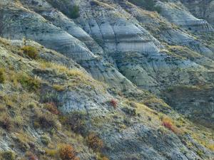 Hillside in the Badlands South Unit, Theodore Roosevelt National Park, North Dakota by Tim Fitzharris