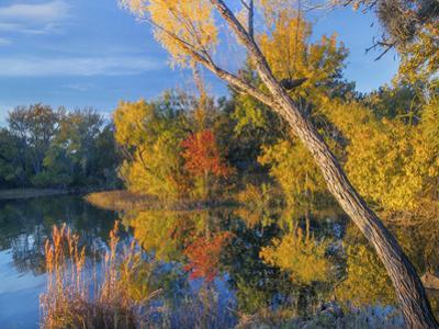 Inks Lake, Inks Lake State Park, Texas. by Tim Fitzharris