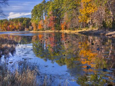Lake Daingerfield, Dangerfield State Park, Texas by Tim Fitzharris