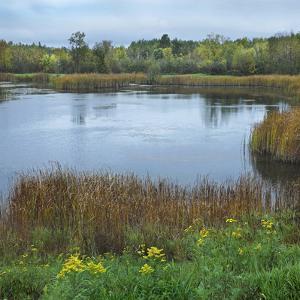 Marshlands Near Pike Lake, Minnesota by Tim Fitzharris