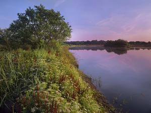 Myakka River, Myakka Lake State Park, Florida, Usa by Tim Fitzharris