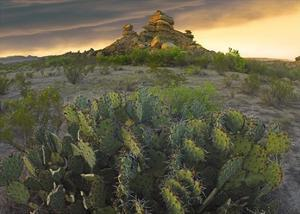 Opuntia and hoodoos, Big Bend National Park, Chihuahuan Desert, Texas by Tim Fitzharris