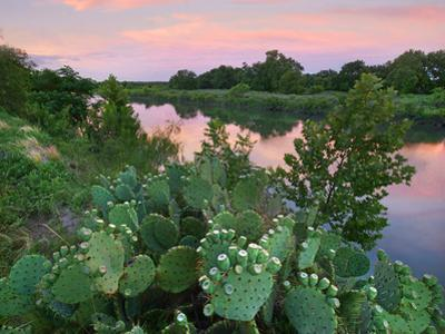 Prickly pear cactus at South Llano River State Park, Texas by Tim Fitzharris