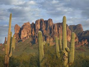 Saguaros and Superstition Mountains, Lost Dutchman State Park, Arizona, Usa by Tim Fitzharris