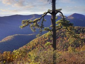 Shenandoah National Park from Big Run Overlook, Virginia by Tim Fitzharris
