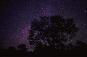 Starry sky with silhouetted Oak tree by Tim Fitzharris